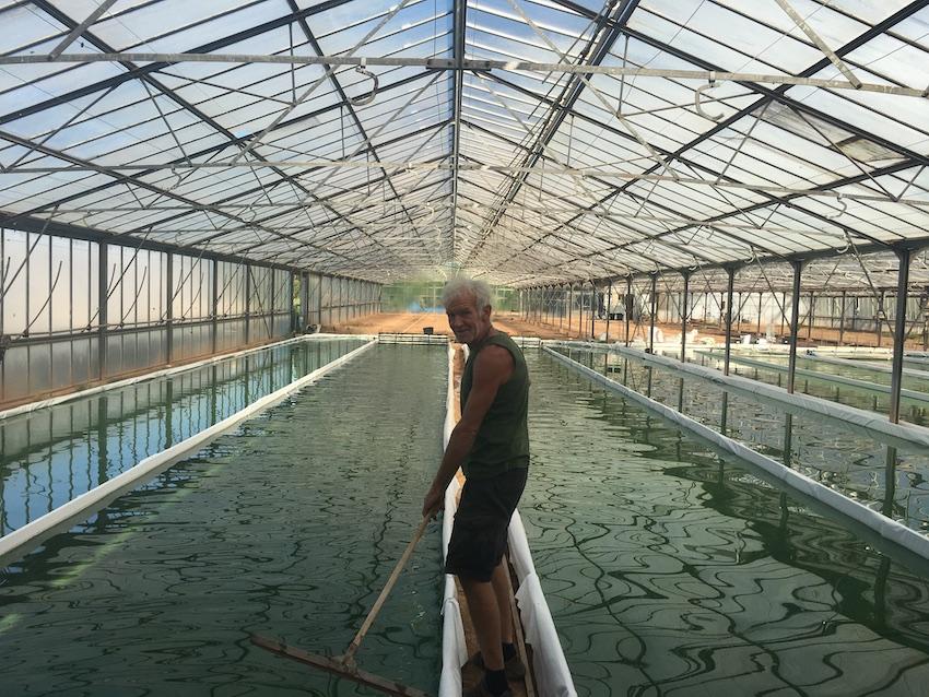 Piet cultivant sa spiruline