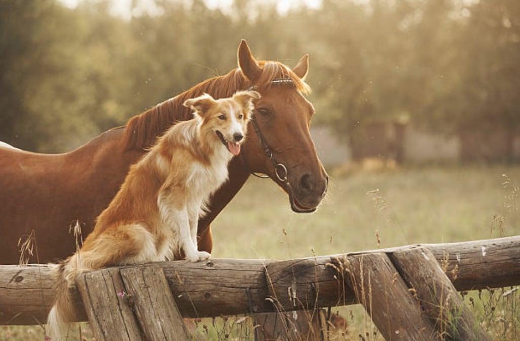 spiruline pour les animaux