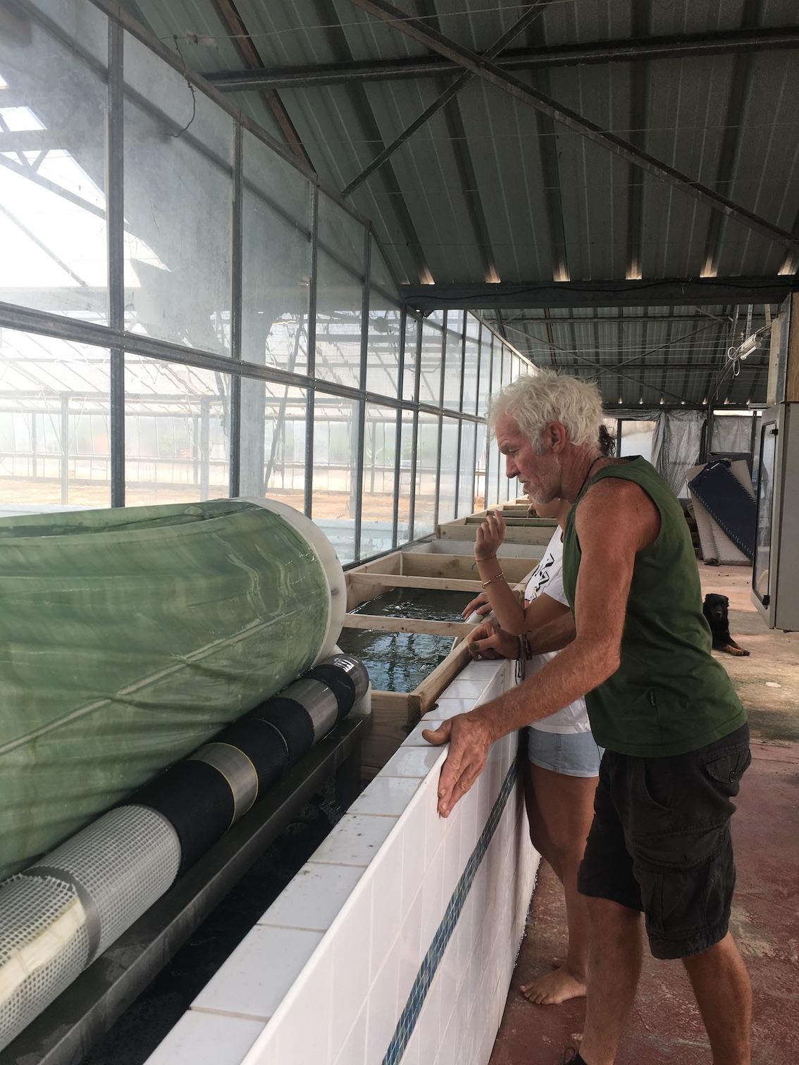 production artisanale de spiruline