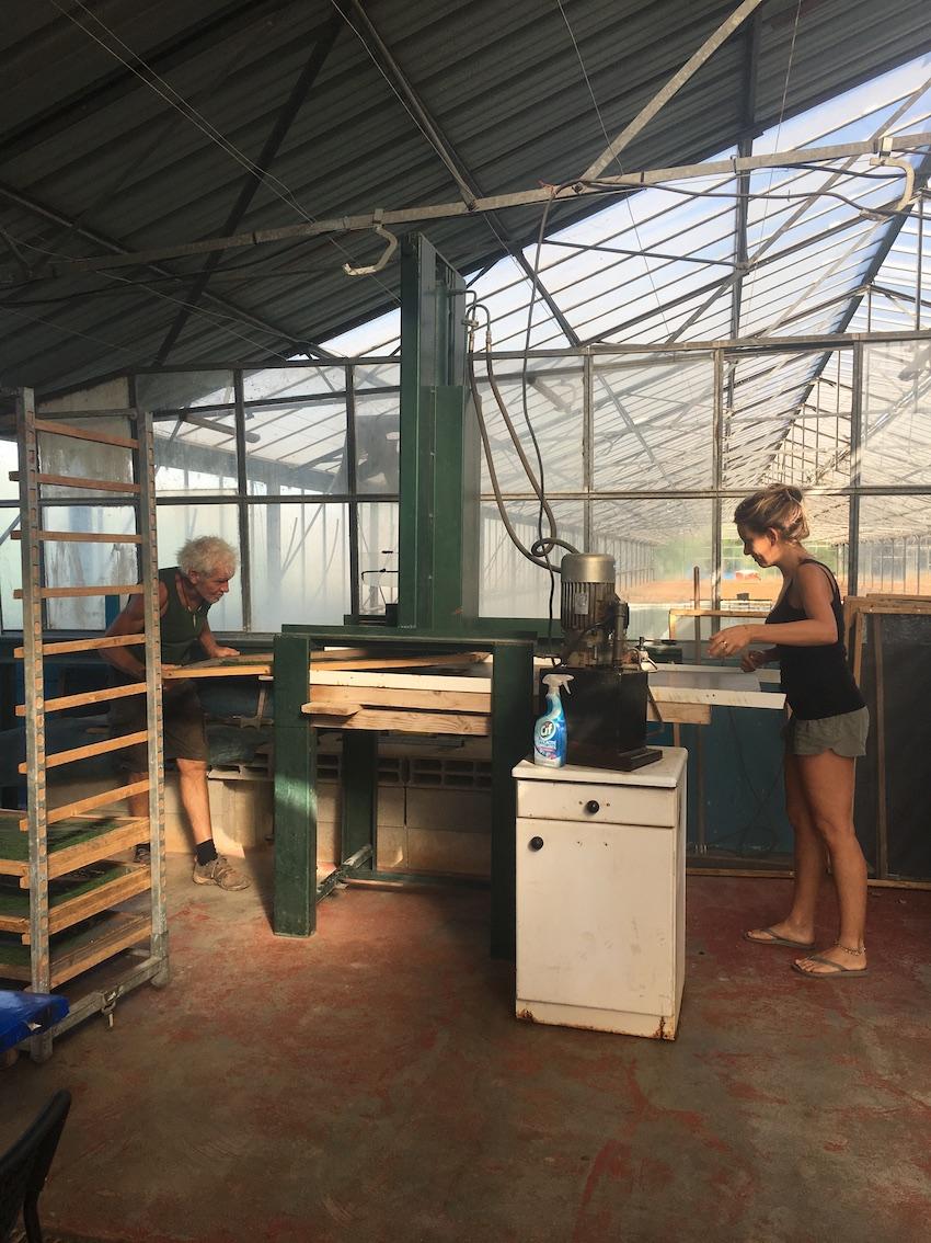 production spiruline artisanale française