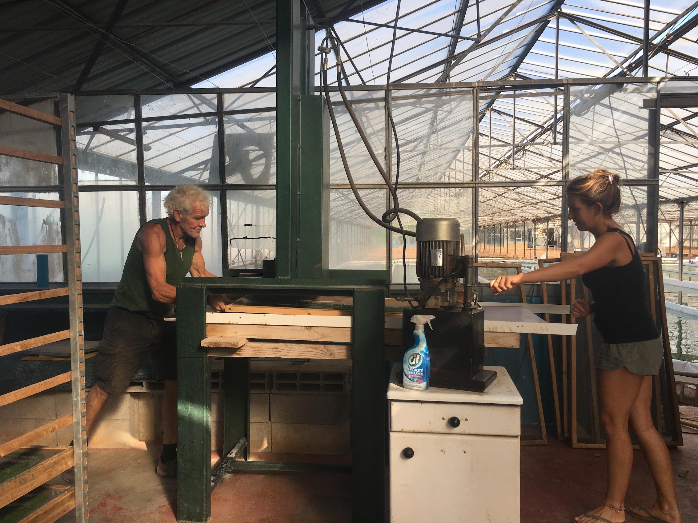 culture artisanale de spiruline